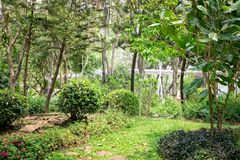 Trees in the shade garden.  royalty free stock image