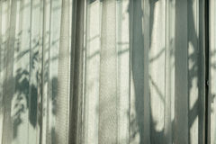 Trees shadow Stock Photography
