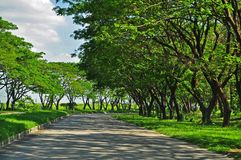 Trees and Shadows. As captured by my Nikkor lens on my way to the airport in the Philippines Stock Photo