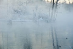 The trees and shadows an fog in winter river Royalty Free Stock Photography