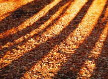 Trees shadows on the ground Stock Images