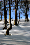 Trees, shadows and snow Royalty Free Stock Image