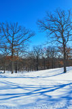Trees with Shadows on Snowy Lawn Royalty Free Stock Photography