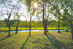 Trees and shadows of trees Royalty Free Stock Images