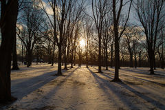 Trees and Shadows in the winter Royalty Free Stock Photos