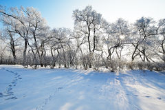 The trees and shadows winter scenery Royalty Free Stock Photography
