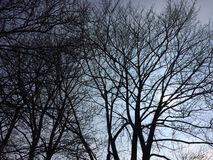 Trees. Shilouette of trees in front of blue sky Stock Images