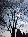 Trees. Shilouette of trees in front of blue sky Royalty Free Stock Photos