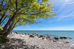Trees on shore of the Baltic Sea Stock Images