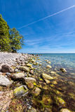 Trees on shore of the Baltic Sea Royalty Free Stock Image