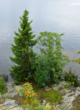 Trees on shore lake Royalty Free Stock Image