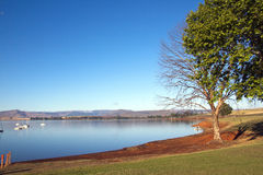 Trees on the Shore of Midmar Dam, Howick, South Africa Royalty Free Stock Photo