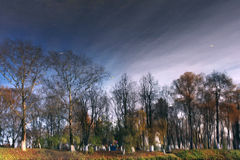Trees shore of the pond autumn. Winter Royalty Free Stock Photos