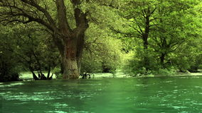 Trees on the shore of river. Close up-trees on the shore of river stock video footage