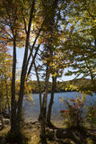 Trees on shore of Russell Pond near Lincoln, New Hampshire. Stock Image