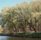 Trees On The Shoreline Royalty Free Stock Photo