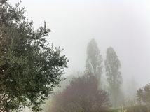 Trees shrouded in mist Stock Photography
