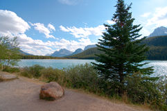 Trees and shrubs along shore of Bow lake Royalty Free Stock Photo