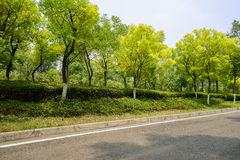 Trees and shrubs by asphalt road in sunny summer Stock Photography