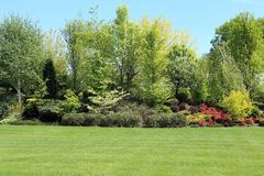 Trees and shrubs. Stock Photography