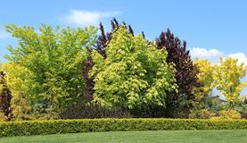 Trees and shrubs. Colored trees and shrubs in the garden in the spring stock image