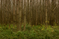 Trees and Shrubs in Dense Forest Royalty Free Stock Photo