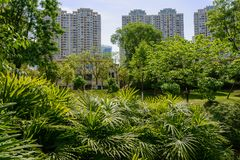 Trees and shrubs flourish before storied apartments in sunny sum Royalty Free Stock Photo