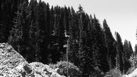 Trees shrubs and line posts at the top of the mountain stock footage