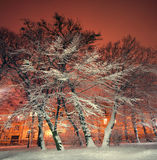 Trees and shrubs in the snow in a park in winter night Stock Image