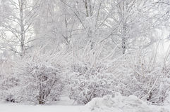 Trees and shrubs snowbank Royalty Free Stock Photo