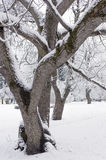 Trees and shrubs snowbank Royalty Free Stock Images