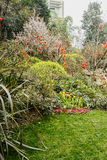 Trees and shrubs in verdant spring Royalty Free Stock Photos