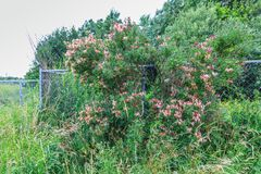 Trees and shrubs stock images