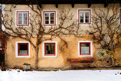 Trees by side of Italian house. Close up of trees growing by side of traditional house, South Tirol, Italy stock images