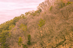 Trees on the side of a mountain Stock Photo