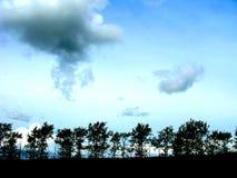 Trees silhouette Stock Photos