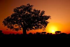 Trees Silhouette Royalty Free Stock Photos