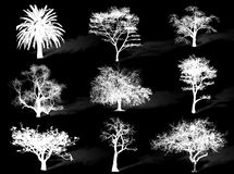 Trees silhouette Stock Images
