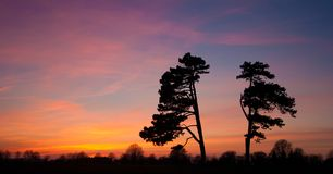 Trees silhouette against amazing sunset Stock Images