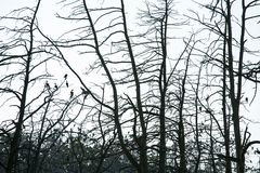 Trees silhouette with birds Stock Photos