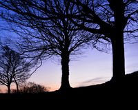 Trees in Silhouette at Dusk. Bare trees stand in silhouette against the backdrop of a winter sunset Royalty Free Stock Image