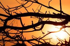 Trees silhouette på solnedgången royaltyfri bild