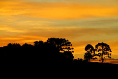 Trees silhouette at sunset light Royalty Free Stock Images