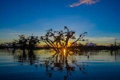 Trees Silhouetted Against An Orange Sky At Sunset Over Laguna Grande In The Cuyabeno Wildlife Reserve National Park, In Royalty Free Stock Image