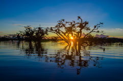 Trees Silhouetted Against An Orange Sky At Sunset Over Laguna Grande In The Cuyabeno Wildlife Reserve National Park, In Stock Images