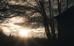 Trees silhouetted against sunset stock photos
