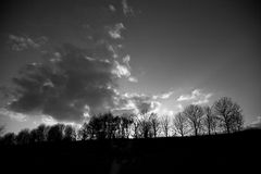 Trees silhouetted on horizon stock photography