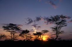 Trees silhouetted mot sunen. Arkivbild