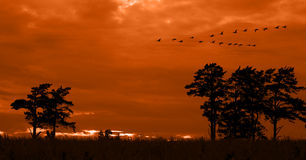 Trees silhouetted at sunset. Scenic view of trees silhouetted with orange sunset; flock of birds flying in background Stock Photo