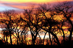 Trees silhouetted at sunset. Scenic view of bare trees silhouetted in colorful sunset Stock Photos
